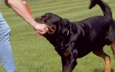 """10 - oji dresūros pamoka: kaip išmokyti šunį komandos """"duok""""?"""