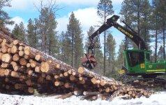 Nuomonė. Ar turime bijoti trobelės miško pavėsyje?