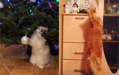 Štai taip katės sujaukia Kalėdas: išdykėlės išlaukia savo sėkmės akimirkos