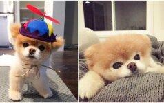 Garsiausias pasaulio šuo: jo nuotraukos priverčia nusišypsoti