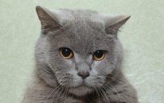 Kaip nustatyti katės amžių?