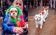 Heloviną švenčia ne tik žmonės: išradingiausi šunų kostiumai