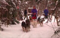 Šunų kinkinių pasirengimas maratonui Minesotoje iš arti