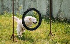 Kad žaidimai su šunimi nesibaigtų liūdnai: taisyklės, kurių privalu laikytis