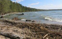 Žvejai sunerimę: kur dingo stintos?