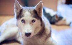 Patarimai šunų augintojams: kaip įveikti šuns baimę Naujųjų naktį?