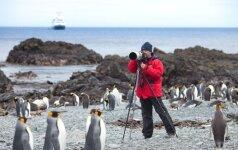 Pingvinams mokslininkai kenkia tiek pat, kiek ir turizmas