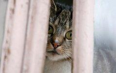 Šiauliuose turėtų sumažėti benamių kačių