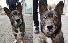 Vilniaus gatvėse pora kasdien persekioja šunis: parodė, kurie praeiviai mieliausi