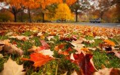 Naudinga: vejos paruošimas šaltajam sezonui