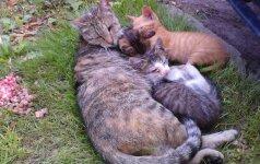 Šiauliuose ieškomi kačiukams akis išbadę sadistai