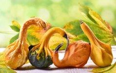 Astrologės Lolitos prognozė spalio 28 d.: atjautos diena