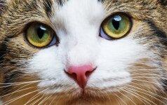 Kaip iš arti atrodo katės akis