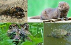 Invazinių gyvūnų ir augalų komercinis auginimas – tik su leidimais