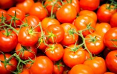 Gudrybės, padėsiančios sėkmingai užbaigti pomidorų auginimo ciklą