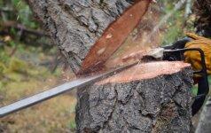 Skaitytojas klausia: ką reikia žinoti, jei noriu nupjauti medį privačioje žemėje