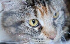 Ką daryti, kad įsigijus katę netektų išmesti baldų