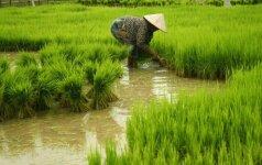 Lietuviai Laoso džiunglėse: ten gali įgyvendinti visas vaikiškas svajones