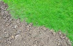 Kaip užtikrintai pašalinti vejos defektus
