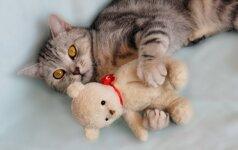 Neįtikėtina mažo meškiuko ir katino draugystė VIDEO