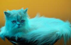 Eksperimentas atskleidė, kokią muziką mėgsta namų gyvūnėliai