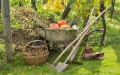 Rugsėjo mėnesio darbai darže bei sode