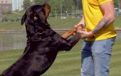 """12 - oji dresūros pamoka: kaip išmokyti šunį komandos """"atnešk""""?"""