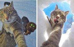Katė, kuri stebina tobulomis savo nuotraukomis