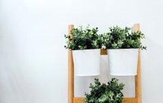 Darau pats: 6 sumanūs būdai, kaip panaudoti senas kopėčias namuose