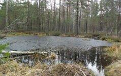 Gamtininkas: jeigu miškus auginame kaip javus, nevaidinkime gamtosaugos