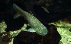 Skaitytojo patirtis: nuosava kūdra – žuvims auginti