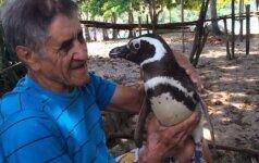 Neįtikėtina istorija: kasmet pingvinas grįžta, kad pamatytų jį išgelbėjusį žmogų