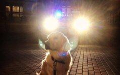 Šuns perspėjimas užkirto kelią nelaimei