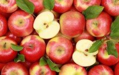 Ką būtina nuveikti sode, darže, bityne ir gėlyne rugsėjo mėnesį