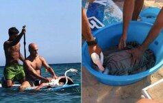 Neįprasta gelbėjimo operacija: geri žmonės išgelbėjo skęstantį flamingą