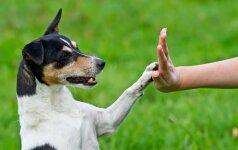 """Konkursas """"Mano gyvūnas"""": nugalėtojo laukia originalus prizas"""