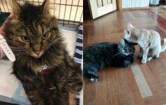 Žiaurus narkomanas suluošino katytę nupjaudamas jai koją: laimei, atsirado Sigita