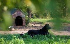 Neįtikėtinas žiaurumas: girtas kaimietis pakorė jį aplojusį šunį