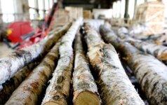 Lapuočių medžiai - neišnaudota medienos pramonės galimybė