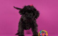 Šunų sveikatos problemos, kurias gali išspręsti reabilitacijos terapija