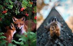 Šie laukiniai gyvūnai neturi ko bijoti: nuotraukose atrodo taip, lyg pozuotų