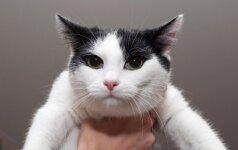 Visa tiesa apie katės uodegą
