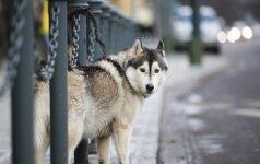 Patarimai, kaip apsaugoti savo šuns pėdutes šaltą žiemą
