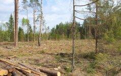 Sutarimo nėra: kiek Lietuvoje liko miškų?