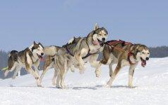 Palikti sniegynuose, arba Taro ir Jiro istorija