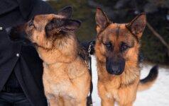"""Vokiečių aviganiai – ne išauklėti """"robotukai"""", o ištikimi šeimininkui šunys"""