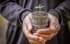 Kaip auginti daigus plastikiniuose buteliuose?
