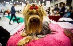 Šunų parodoje – šimtai įspūdingo grožio keturkojų