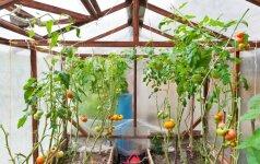 Lysvių įrengimas šiltnamyje: 5 svarbiausi žingsniai