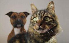Kas nutiktų, jei katei ar šuniui pašalintumėte ūsus